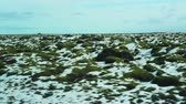 Iceland moss on rocks and snow landscape view from roadtrip