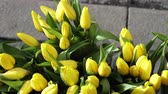 Yellow tulip flower bud selling on on Denmark street