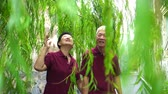 idősebb : Asian old couple holding hand walking through green willow tree happy together Stock mozgókép