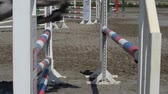 equestrian sport : horse jumping obstacles