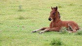 pet : foal lying on field