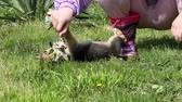 mammal : happy puppy play with rope Stock Footage
