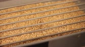 sıra : Grinding of malt for producing beer at the brewery. The crushing of the malt in an electric mill. Close up Stok Video