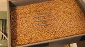 pressed : Grinding of malt for producing beer at the brewery. The crushing of the malt in an electric mill. Close up Stock Footage
