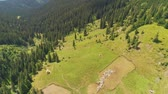 Aerial Drone Flight above beautiful mountain landscape. Green pastures with pine tree forest. Sheep grazing on field, farmland. Carpathian mountains, Ukraine, Europe. Camera zoom and rotate. 4K motion Vídeos