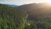 Aerial Drone View: Flight over pine tree forest and country road in sunset soft light. Mountain range in background. Nature, travel, holidays. Carpathians, Ukraine, Europe. Camera go up. 4K motion Vídeos