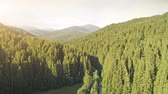 Aerial Drone View: Flight over pine tree forest. Mountain range in background. Beauty landscape. Nature, travel, hiking, holidays concept. Carpathian mountain, Ukraine, Europe. Camera go up. 4K motion