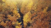 Golden Autumn Forest Creek Scenery Aerial View. Wild Nature Wood Landscape long River Flow Overview. Yellow Tree Foliage Sight Eco Friendly Environment Concept Top Down Drone Flight Footage 4K (UHD)
