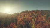 Epic Highland Slant Surface Sun Beam Aerial View. Multicolored Autumn Fir Tree Wood Wildlife Nature Habitat Overview. Sunrise Sight Forest Cliff Clean Ecology Concept Drone Flight Footage 4K (UHD)