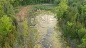 Green pine forest and swamp in early morning, aerial from above view pan.