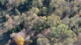 Aerial view of colored autumn trees in the forest. Drone panning.