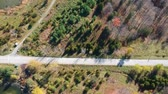 yaprak döken : Aerial flying above the stunning colorful trees at fall on sunny day. Beautiful autumn trees in brown and yellow colour. Fall foliage in autumn forest. Stok Video