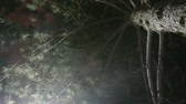 Торонто : Winter night street lights or lamp with falling snow. View from under the fir or conifer tree. Extreme wind gust. Winter storm. Snowflakes moving in random directions.