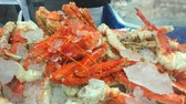 Red king crab legs cooked and cooled on the ice. Delicious seafood and luxury food. Canadian fish market. Smartphone footage. Stock Footage