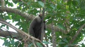 Monkey on the tree in Sri Lanka Stock Footage