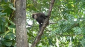 A monkey descends from a tree in the jungles of Sri Lanka