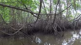 Mangrove forest in Sri Lanka. POV from a boat