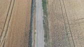 reap : Aerial view of golden rye or wheat field. Agriculture and harvest season. Above shot of countryside scenery Stock Footage
