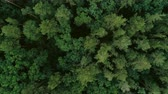 förster : Flying over tree tops. Green forest aerial view. Wildlife nature scenery
