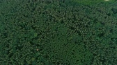 förster : Aerial shot of woodland and nature scenery. Green tree tops and field landscape flyover