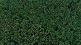 oxigênio : Forest aerial view. Green pine and spruce flyover. Lush trees plantation.