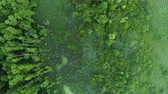 lungs : Swamp and forest aerial view. Conservation park flyover. Lush greenery and trees plantation. Stock Footage