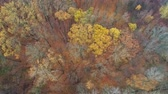 geográfico : Autumn forest landscape aerial shot. Poetic inspiration. Yellow trees and red fallen leaves. Stock Footage