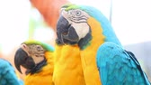 poleiro : colorful parrot macaw sequence