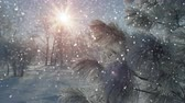 jinovatka : Snowfall in beautiful winter park. Seamless loop slowmotion christmas scene Dostupné videozáznamy