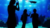 asphalt : Oceanarium. Silhouettes of unrecognizable adults and children. People watch and take pictures of the amazing underwater world