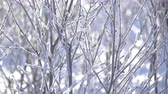 jinovatka : Winter frosty morning. The branches of the bush covered with hoarfrost in the sunlight. Close-up