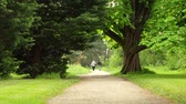 ladin : Summer park. The wind is playing with green foliage of old deciduous trees. Two people walk along a footpath