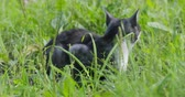 whiskers : homeless cat sitting in the grass