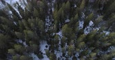 facing down : Aerial fly forward facing down over winter forest with old trees in sunset time, 4k
