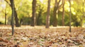november : slightly toned slow motion footage falling autumn leaves in park, 180fps