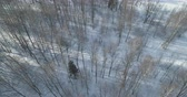 назад : Aerial backward fly over bare birch forest on a sunny winter day