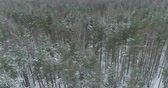 zúzmara : Aerial backward fly over winter frozen pine forest