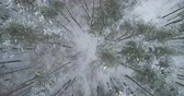 непосредственно над : Aerial top view backward fly over winter frozen pine forest