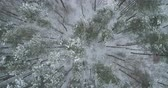 непосредственно над : Aerial top view forward fly over winter frozen pine forest