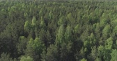 cam : Aerial forward flight over mixed forest on a sunny summer day Stok Video