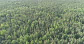 береза : Aerial forward flight over mixed forest on a sunny summer day Стоковые видеозаписи