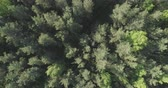 непосредственно над : Aerial top view ascent over mixed forest on a sunny summer day Стоковые видеозаписи