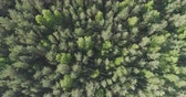 diretamente acima : Aerial top view descent over mixed forest on a sunny summer day