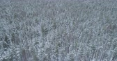 ladin : Aerial backward high angle flight over frozen winter pine forest Stok Video