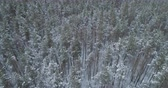 turn over : Aerial forward high angle flight with turn over frozen winter pine forest