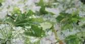srážky : Slow motion closeup of hailstones on the grass after strong hailstorm