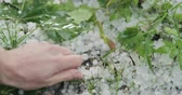 метеорология : Slow motion closeup pov male hand showing hailstones after hailstorm Стоковые видеозаписи