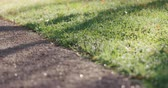 baixo ângulo : Slow motion focus pull of park path with green grass and fallen leaves in the morning Stock Footage