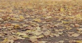puxar : Slow motion focus pull of fallen autumn leaves on the ground