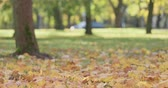 baixo ângulo : Slow motion low angle shot of maple leaves in autumn park Stock Footage